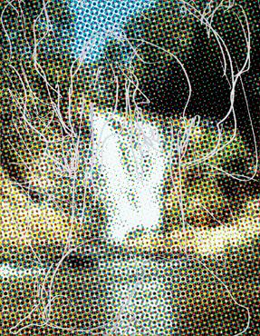 Waterfall (Dots) Tree Rocks